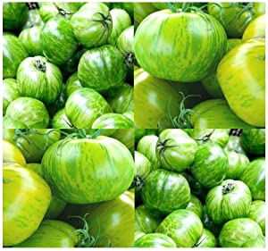 20 GREEN ZEBRA Tomato Seeds HEIRLOOM ~ SWEET & TANGY Rare Green-Yellow Stripes ~
