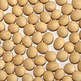 国産(宮城県) ミヤギシロメ大豆 1kg