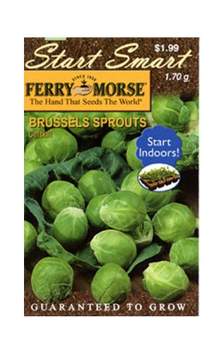 Ferry Morse 760 Hummingbird Wildflower Seeds 1,000 Square Foot Shaker Can