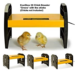 EcoGlow 20 Chick Brooder