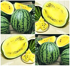 Amazon.com : 10 x PETITE YELLOW WATERMELON Seeds - Perfect For Home ...