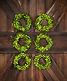 6'' Mini Preserved Boxwood Wreath... 1 Wreath Per Order