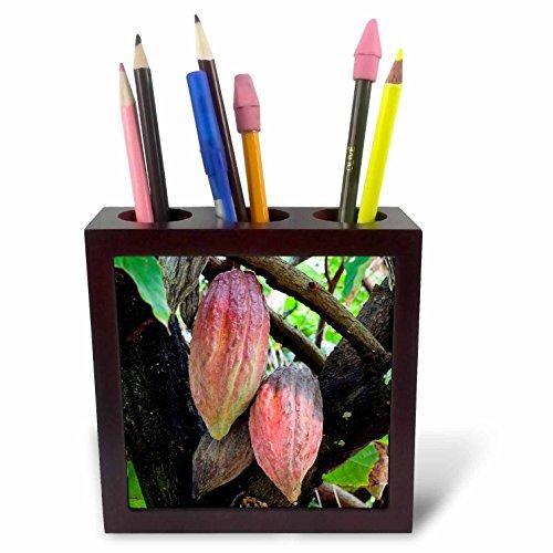Danita Delimont - Fruits - CocoPods, Cocoa tree, Dominica - 5 inch tile pen holder (ph_226564_1) (Cocoa Fruit compare prices)