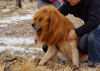 Large Pet Dog Lion neckerchief Collar Wigs Mane Hair Labrador Golden retriever lanmu