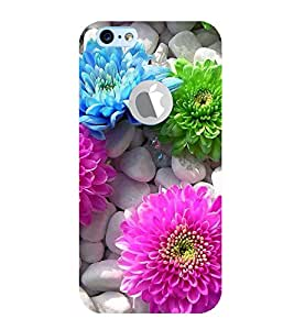 Vizagbeats Colourful Flowers Back Case Cover for Apple iPhone 6 logo cut