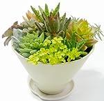 多肉植物寄せ植え5寸プラ鉢