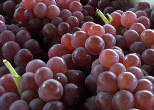 福岡県産 デラウェア(ぶどう) 1箱:約2kg(9房から16房入り) 糖度が高く、酸味が少ないぶどう ブドウ