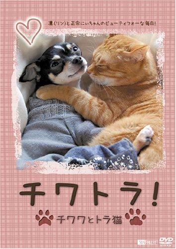 シチワトラ! ★チワワとトラ猫☆凛(リン)と正宗にぃちゃんのビューティフォーな毎日!