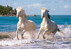Weisse Camargue-Pferde - 1000 Teile Puzzle von Castorland