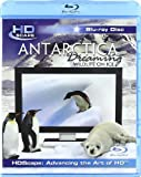 echange, troc Antarctica Dreaming - Wildlife On Ice [Blu-ray] [Import anglais]