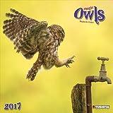 [2017年 アート カレンダー]ツシタ TUSHITA/MAGIC OWLS ふくろう 壁掛け