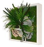 Flowerbox Décoration