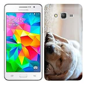WOW Printed Designer Mobile Case Back Cover For Samsung Galaxy Grand Prime / GRAND PRIME SM-G530