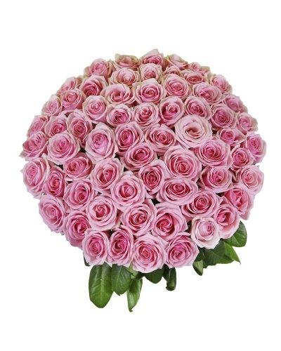 50 Royal Farm Fresh Pink Roses   JustFreshRoses