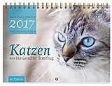 Katzen -- Ein literarischer Streifzug 2017: Wandkalender / Wochenplaner