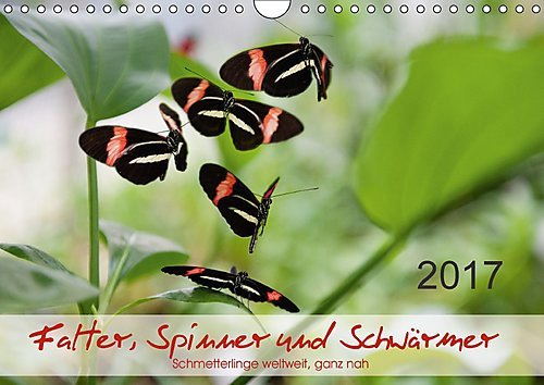 falter-spinner-und-schwarmer-wandkalender-2017-din-a4-quer-zwolf-farbenprachtige-grazile-schmetterli