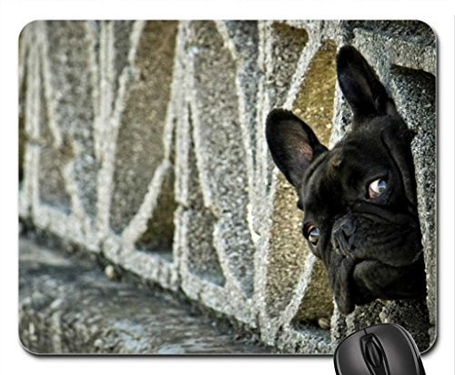 Curiosity Mouse Pad, Mousepad (Dogs Mouse Pad)