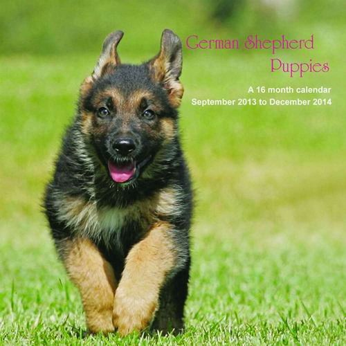 German Shepherd Puppies 2014 Wall Calendar