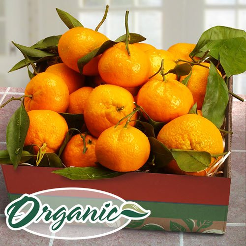 Mendocino Organic Mandarins Gift Box