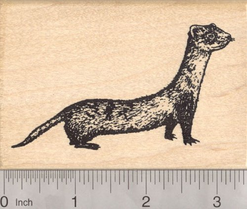 Black Footed Ferret Rubber Stamp, Endangered North American Wildlife