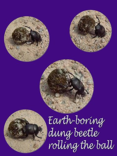 Clip: Earth boring dung beetle rolling the ball on Amazon Prime Instant Video UK