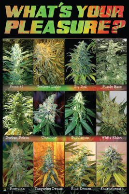 (24x36) What's Your Pleasure Pot Marijuana Art Poster Print Poster Print, 24x36