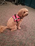 Official Service Dog Vest Small