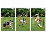 Profi Hundetrainigsset Agility 3 Übungen für Ihren Hund GRATIS TRAGETASCHE