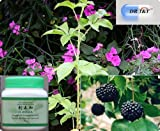 100g Siberian ginseng(Eleutherococcus) concentrated powder(5:1)