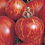 Tigerella - rot-gelb gestreifte Stab-Tomate - alte Sorte - 20
