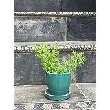 The Garden Store Ceramic Glazed Pot Small - Aqua Green
