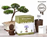 Grow 4 Bonsai Trees with Nature's Blossom Growing Kit. Soil, Pots and Tree Seeds are included. Plants are Great for Indoor / Outdoor Gardens. Unique Gardening Gift For Beginners and Nature Lovers.