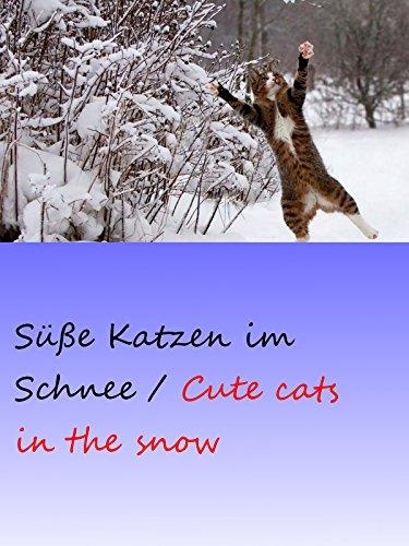 Clip: Süße Katzen im Schnee / Cute cats in the snow on Amazon Prime Instant Video UK