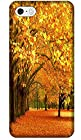 Autumn Leaves Yellow Trees Beautiful Place Phone Cases Special For iPhone 5/5S No.13