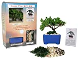 Eve's Bonsai Tree Starter Kit, Complete Kit with 2 Year Old Japanese Juniper in Gift Box