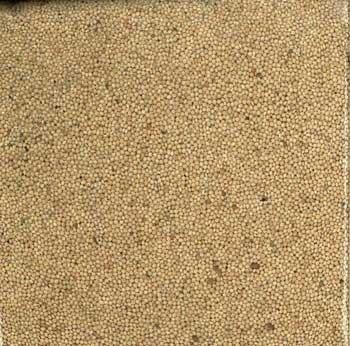 Cheap Sun Seed Company BSS32004 Millet White Proso (B000YJ2S2U)