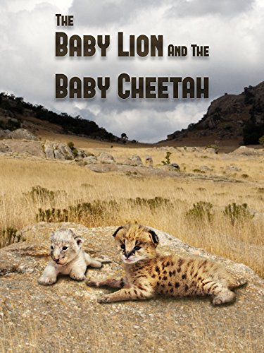 The Baby Lion & The Baby Cheetah