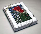 "Cleartop Greeting Card Box, For 5"" x 7"" (A-7) Cards, Qty 10"