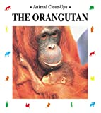 img - for The Orangutan: Forest Acrobat (Animal Close-Ups) book / textbook / text book