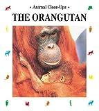 img - for The Orangutan: Forest Acrobat (Animal Close-Ups) book / textbook / text book