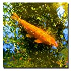 Trademark Fine Art Koi Fish I by Amy Vangsgard Canvas Wall Art, 24x24-Inch