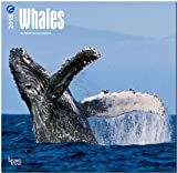 Whales 2015 Square 12x12 (Multilingual Edition)