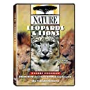 Nature: Leopards and Lions
