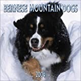 Bernese Mountain Dogs 2004 Calendar