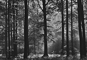 Avalon black white forest photo wallpaper wall mural for Black and white forest wall mural