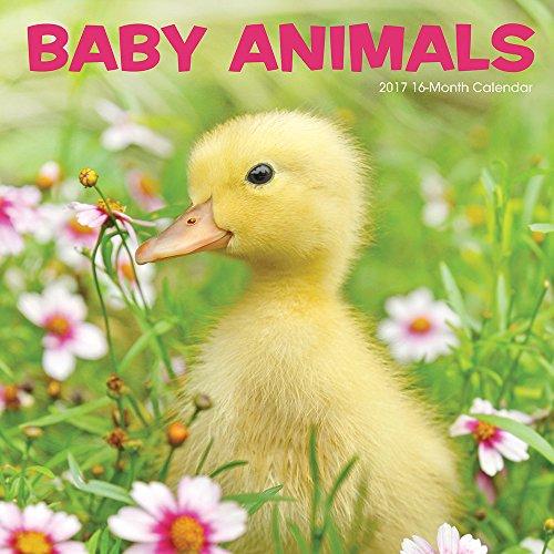 Summit Avalon 2017 Calendar 12 x 12 Wall Baby Animals (82362)