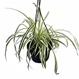 10 beautiful houseplants safe for cats and dogs. Black Bedroom Furniture Sets. Home Design Ideas