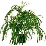 Gras 45 cm künstlich Kunstpflanze Kunstgras