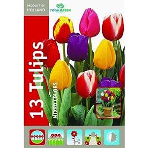 13pk Mixed Tulip Bulbs