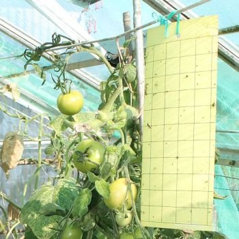 yellow-sticky-traps-greenhouse-whitefly-fly-traps-with-hanger-various-pack-sizes-available-10